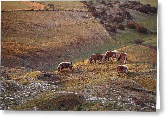 Grazing On The Peaks In Winter Greeting Card by Chris Fletcher