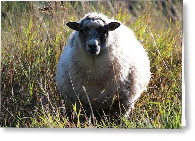 Grazing Sheep Three Greeting Card by Nicholas Miller