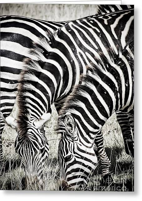 Grazing Zebras Close Up Greeting Card by Darcy Michaelchuk