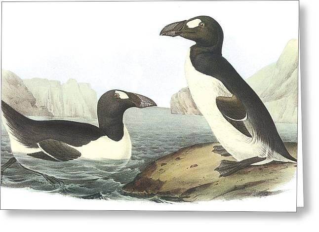 Flightless Greeting Cards - Great Auk Greeting Card by John James Audubon