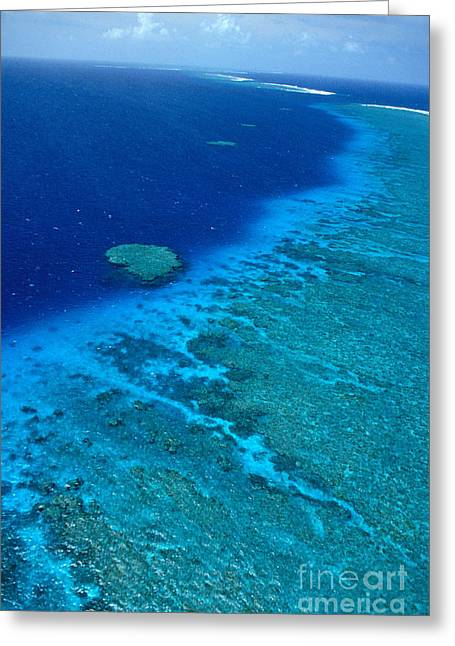 Lowtide Greeting Cards - Great Barrier Reef Greeting Card by Bill Schildge - Printscapes