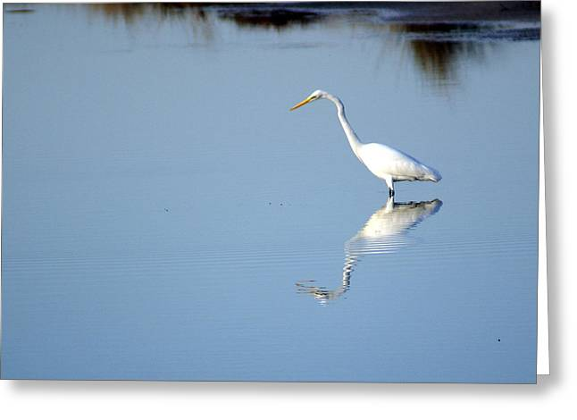 Great Blue 2 Greeting Card by Marty Koch