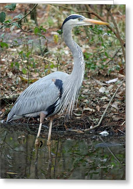Great Birds Greeting Cards - Great Blue Heron 1-1-11 Greeting Card by Suzanne Gaff