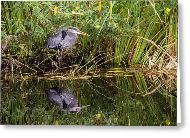 Saw Greeting Cards - Great Blue Heron and his reflection Greeting Card by Zina Stromberg