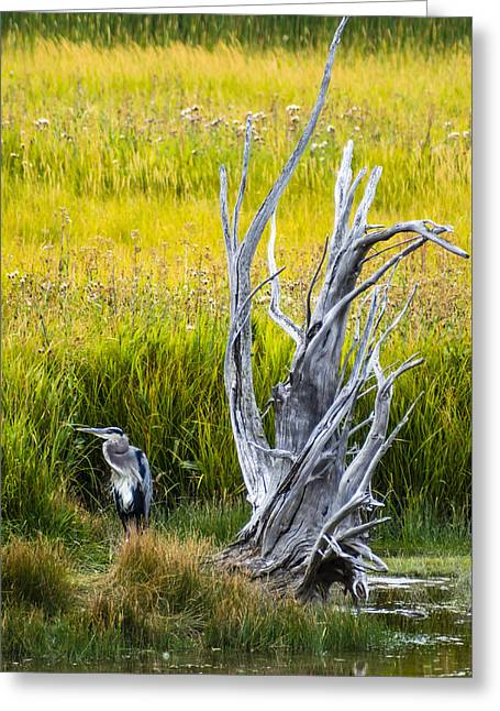 Wildlife Refuge. Greeting Cards - Great Blue Heron and Stump Greeting Card by John Trax
