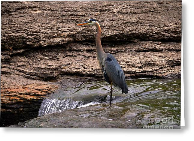 Historic Site Greeting Cards - Great Blue Heron at the Falls Greeting Card by Catherine Sherman