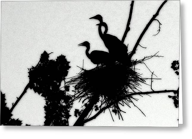 Hungry Chicks Greeting Cards - Great Blue Heron Chicks Silhouette Greeting Card by Kathy Barney
