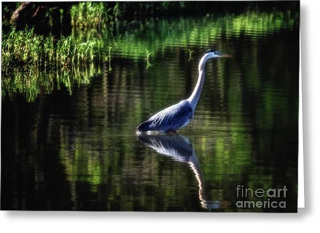 Great Blue Heron Greeting Card by Elizabeth Winter