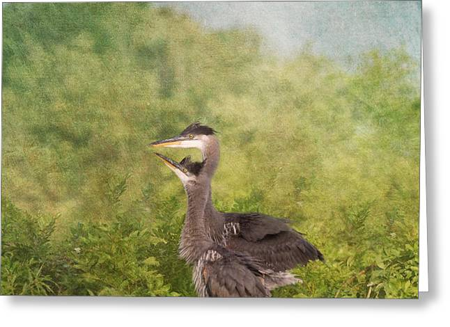 Fledglings Greeting Cards - Great Blue Heron Fledglings  Greeting Card by Kim Hojnacki
