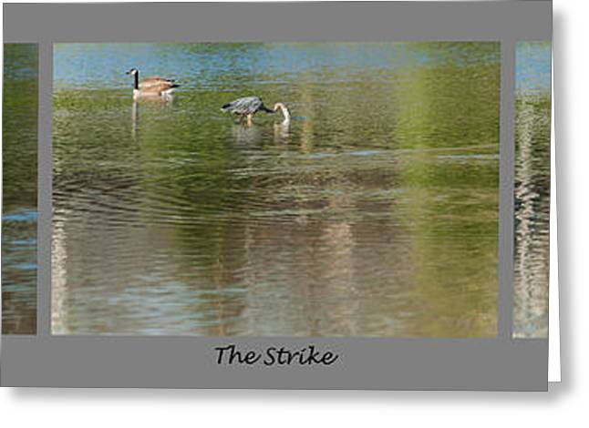 Water Fowl Greeting Cards - Great Blue Heron Hunt Strike Meal Greeting Card by Edward Peterson
