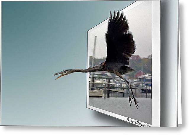 Bule Greeting Cards - Great Blue Heron In Flight Greeting Card by Brian Wallace