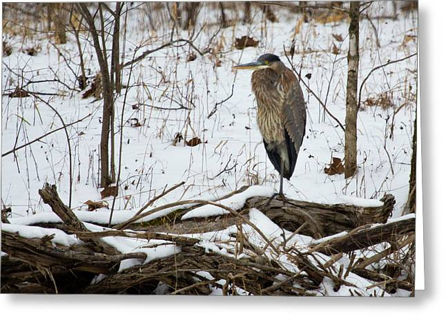 Great Blue Heron In The Snow Greeting Card by Flying Turkey