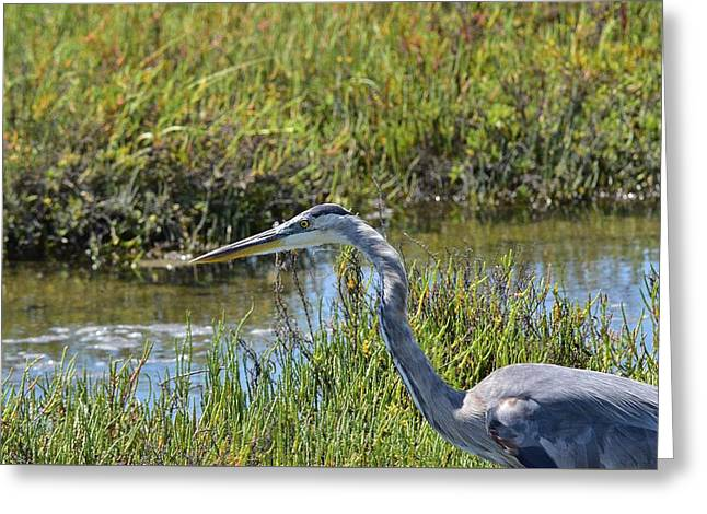 California Beaches Greeting Cards - Great Blue Heron IV Greeting Card by Linda Brody
