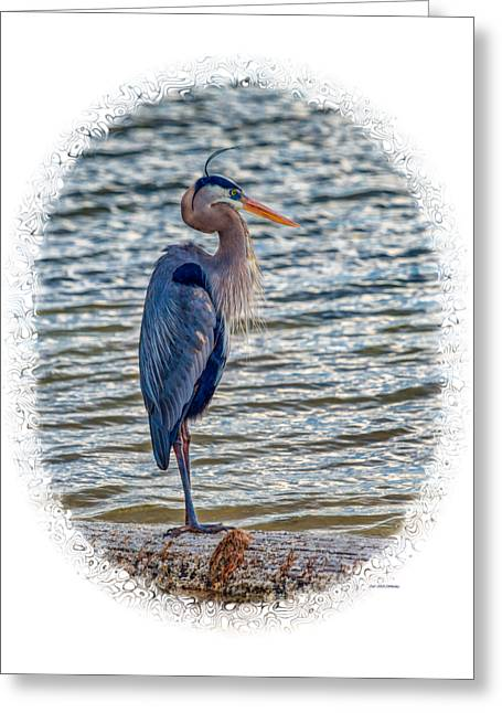 Water Fowl Greeting Cards - Great Blue Heron Greeting Card by John Bailey