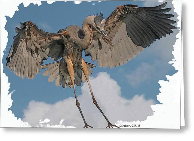 Great Blue Heron Digital Art Greeting Cards - Great Blue Heron Landing Greeting Card by Larry Linton