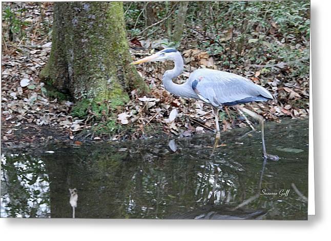 Great Blue Heron Digital Art Greeting Cards - Great Blue Heron on the Move Greeting Card by Suzanne Gaff