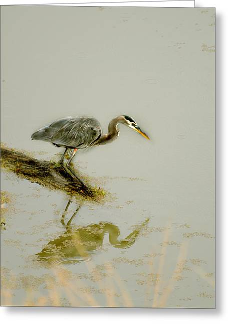 Great Blue Heron Greeting Card by Pamela Patch