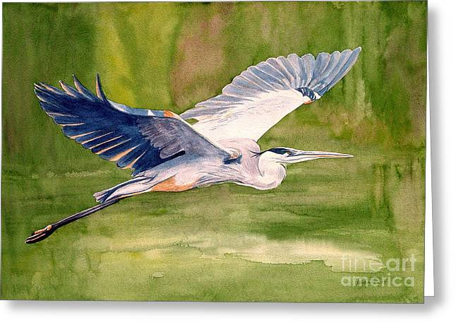 Heron.birds Greeting Cards - Great Blue Heron Greeting Card by Pauline Ross