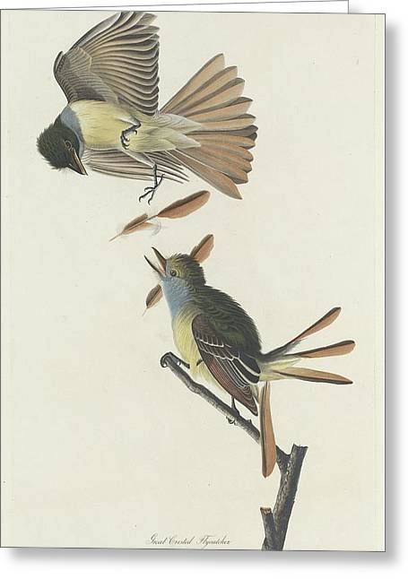 Small Bird Greeting Cards - Great Crested Flycatcher Greeting Card by John James Audubon