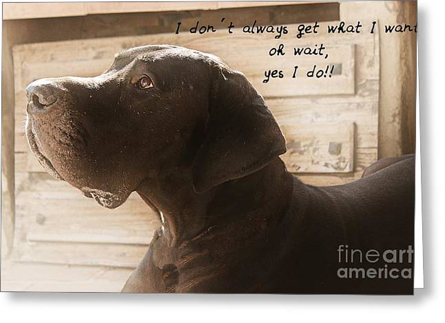 Best Friend Greeting Cards - Great Dane Love Greeting Card by Clare Bevan