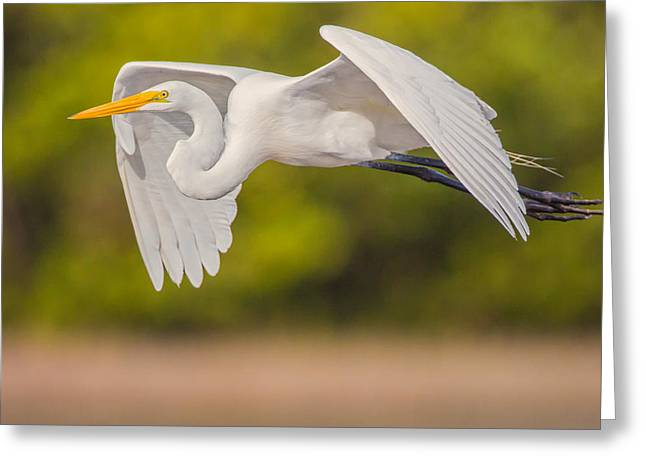 Great Egret Folded Wings Greeting Card by Andres Leon