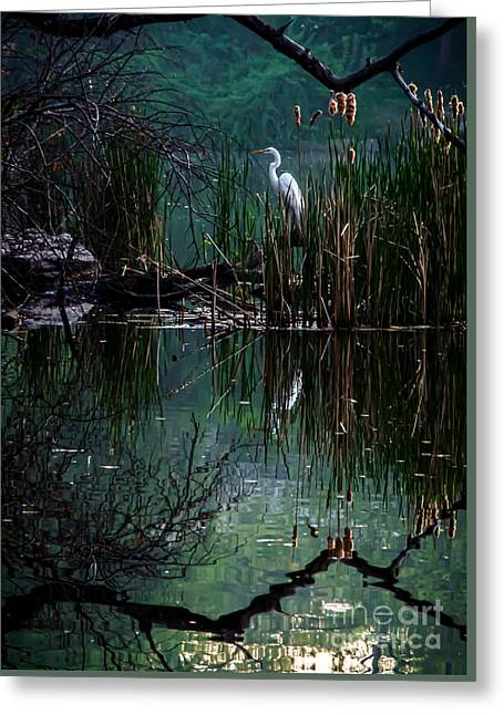 Pond In Park Greeting Cards - Great Egret in Central Park I Greeting Card by James Aiken