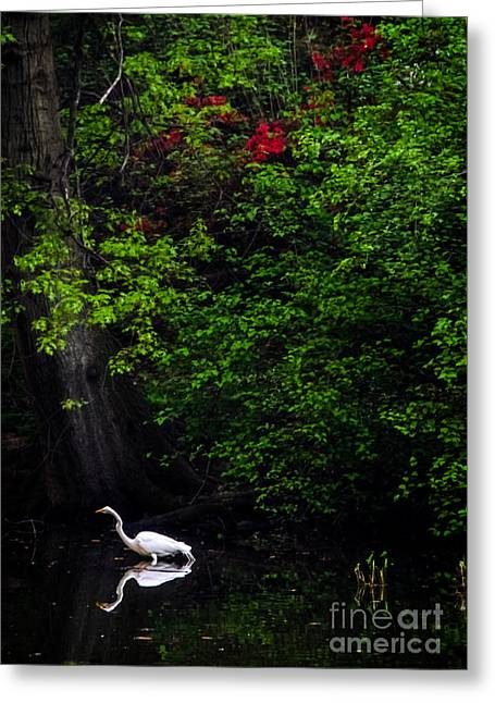 Pond In Park Greeting Cards - Great Egret in Central Park II Greeting Card by James Aiken