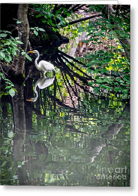 Pond In Park Greeting Cards - Great Egret in Central Park IV Greeting Card by James Aiken