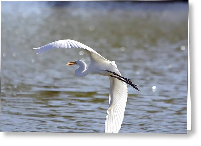 Hunting Bird Greeting Cards - Great Egret In Flight - Painterly Greeting Card by Roy Williams