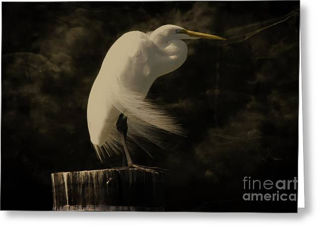 Ghostly Greeting Cards - Great Egret Greeting Card by Vickie Emms