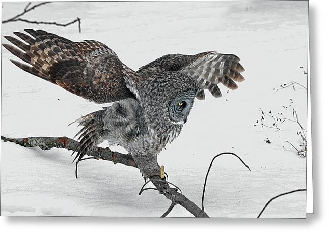 Saw Greeting Cards - Great Gray Owl Art Greeting Card by Asbed Iskedjian