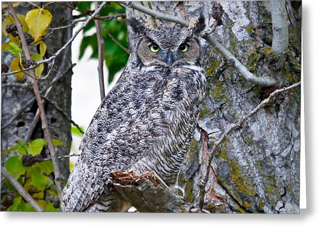 Great Horned Owl Greeting Card by Athena Mckinzie