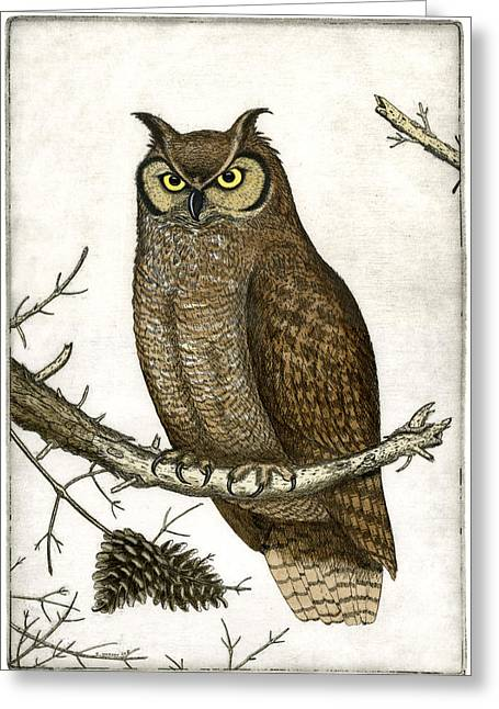 Etching Greeting Cards - Great Horned Owl Greeting Card by Charles Harden