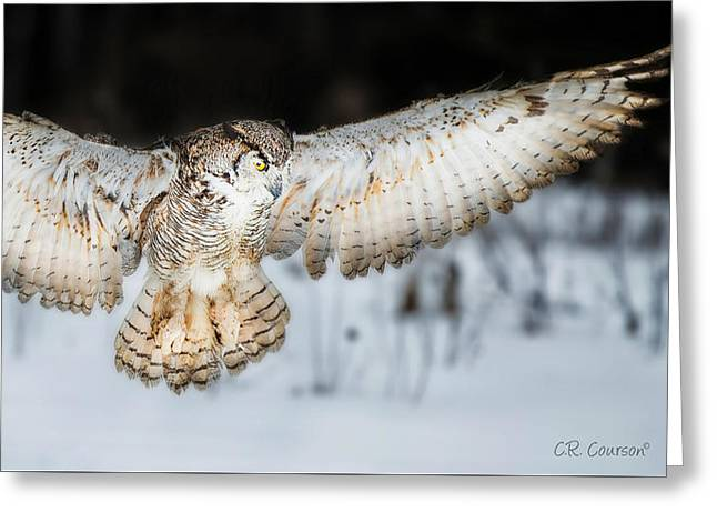 Great Horned Owl Flight Greeting Card by CR  Courson