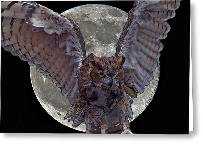 Great Birds Greeting Cards - Great Horned Owl Greeting Card by Larry Linton