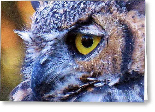 March Hare Greeting Cards - Great Horned Owl Macro 2 Greeting Card by Michele Penner