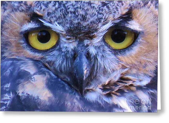 March Hare Greeting Cards - Great Horned Owl Macro Greeting Card by Michele Penner