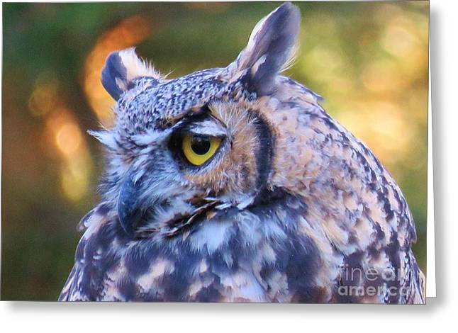 March Hare Greeting Cards - Great Horned Owl  Greeting Card by Michele Penner