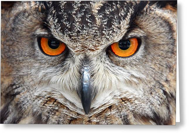 All Birds Greeting Cards - Great horned Owl Greeting Card by Pierre Leclerc Photography