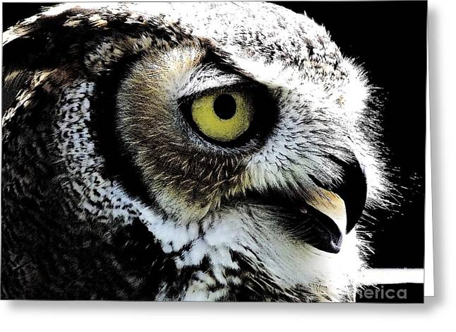 Great Horned Owl Greeting Card by Rose Santuci-Sofranko