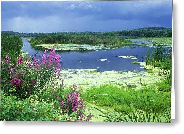 Great Meadows National Wildlife Refuge Greeting Card by John Burk