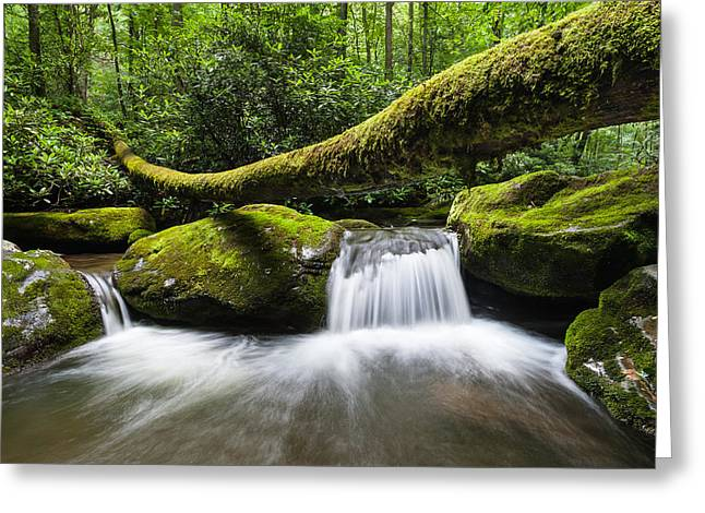 Gatlinburg Tennessee Greeting Cards - Great Smoky Mountains National Park Roaring Fork Greeting Card by Mark VanDyke