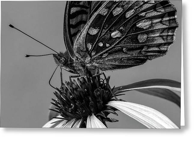 Great Spangled Fritillary Black And White Greeting Card by Bob Orsillo