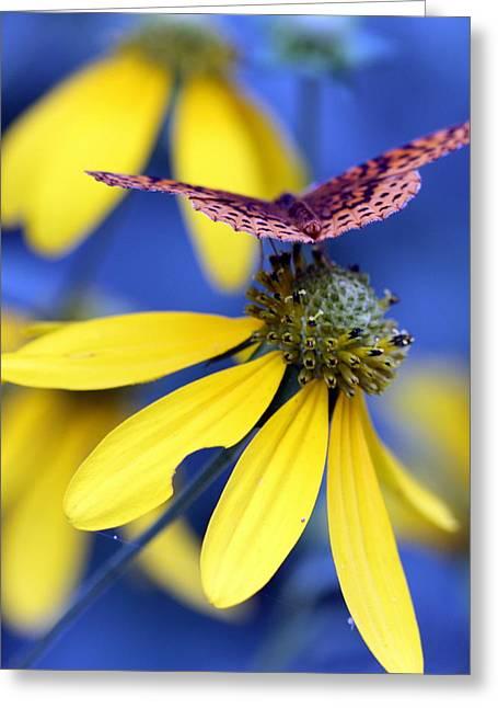 Yellow Coneflower Greeting Cards - Great Spangled Fritillary on Yellow Coneflower Greeting Card by Susie Weaver