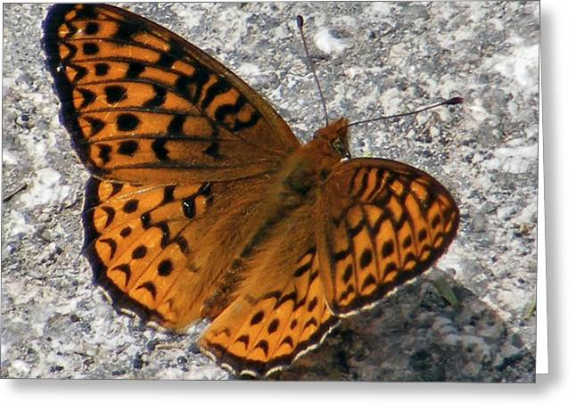 Moth Greeting Cards - Great Spangled Fritterlary Greeting Card by Dave Martsolf