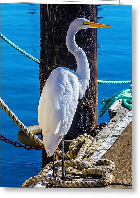 Great White Heron Greeting Card by Garry Gay