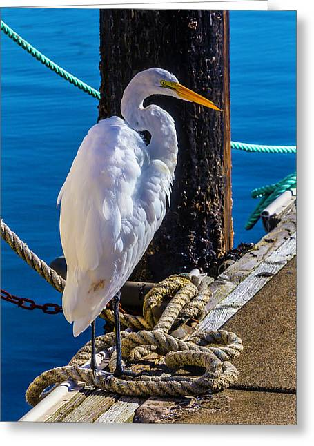 Great White Heron On Boat Dock Greeting Card by Garry Gay