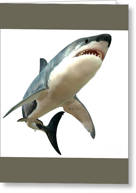 White Shark Greeting Cards - Great White Shark Body Greeting Card by Corey Ford