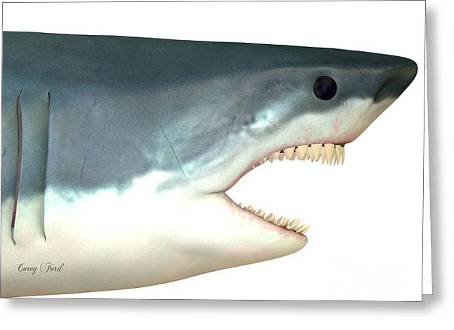 White Shark Greeting Cards - Great White Shark Head Greeting Card by Corey Ford