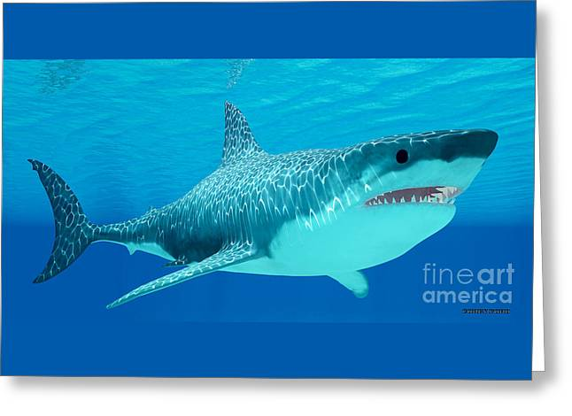 Great White Shark Undersea Greeting Card by Corey Ford